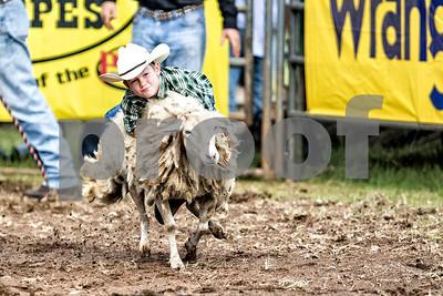 Rodeo-3370-12x8