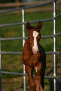 Toby (1 week old)
