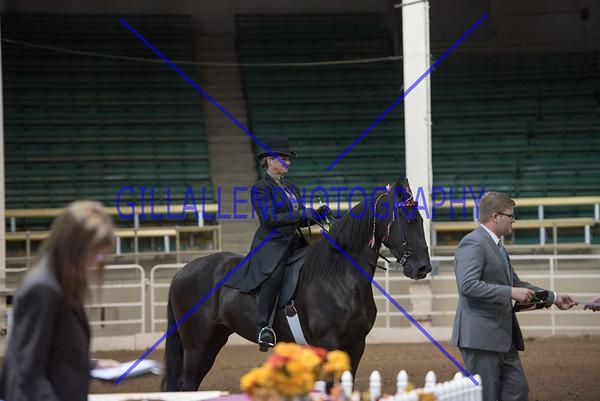 2015 Colorado Fall Charity Horse Show
