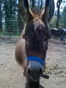 Chewy the donkey.