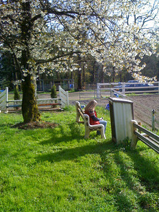 Spring at Windsong.  Sitting under the blossoms watching Nat in the outdoor arena.