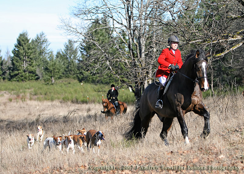 "070217 Hounds and Horses - Image from a Fox Hunt in the Pacific Northwest - please note that a scented towel was used to provide a sent trail for the hounds. Image from a gallery of fox hounds and horses running through the woods in pursuit if the 'fox'. Images were acquired as 8 megapixel JPG files with a 30D and 70-200 2.8 IS and have been post processed and downsized to 1024 pixels for display on the web. Image Copyright © 2007 J. Andrew Towell for Poulsen Photography. Image use here courtesy of Poulsen Photography. All Rights Reserved. Please contact the copyright holder at <a href=""http://www.poulsenphoto.com"">http://www.poulsenphoto.com</a> to discuss any and all usage rights and to see the complete image gallery from the event."