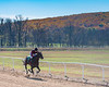 Montpelier Races 2019-7631