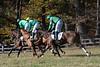 Montpelier Races 2019-8131