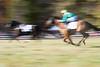Montpelier Races 2019-8162