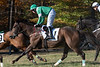 Montpelier Races 2019-8128
