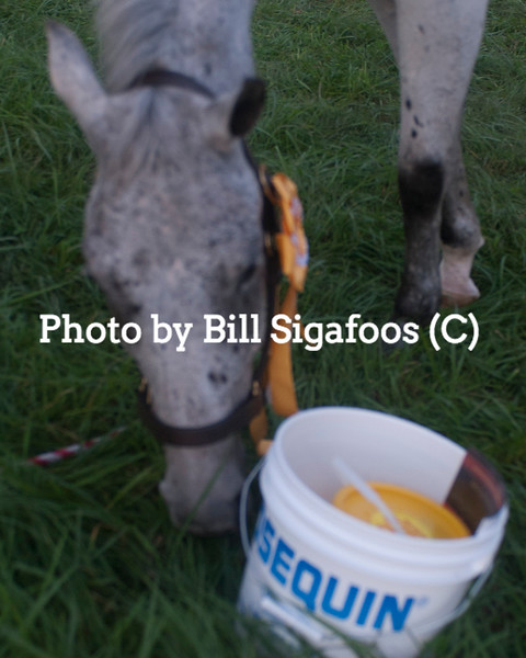 Middleburg Horse Trials-0862