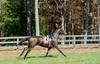 Montpelier Hunt Races 2013-0679
