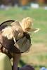 Montpelier Hunt Races 2013-0691