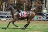 Montpelier Hunt Races 2013-0686