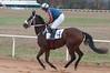 Montpelier Hunt Races 2014-0652