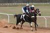 Montpelier Hunt Races 2014-0668