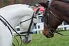 Montpelier Hunt Races 2014-0634