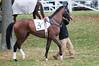Montpelier Hunt Races 2014-0632
