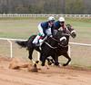 Montpelier Hunt Races 2014-0669