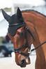Rolex Kentucky  3 Day  2013 -7429