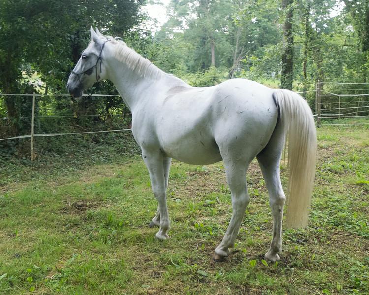 Les Abrons Riding 2014-1070267