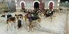 Les Abrons Riding 2014-1070227