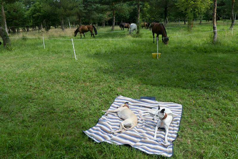 Les Abrons Riding 2014-1070936