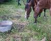 Les Abrons Riding 2014-1070269