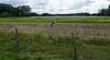 Les Abrons Riding 2014-1070910