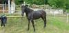Les Abrons Riding 2014-1080122