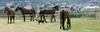 Les Abrons Riding 2014-1070730