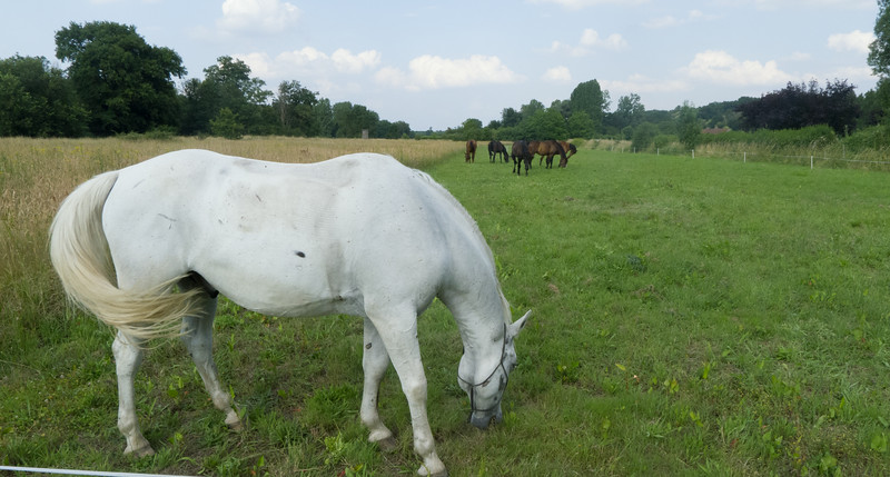 Les Abrons Riding 2014-1070639