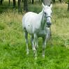 Les Abrons Riding 2014-1070948