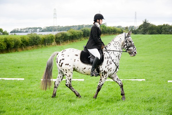 Ellen Valley Dressage - August 2016