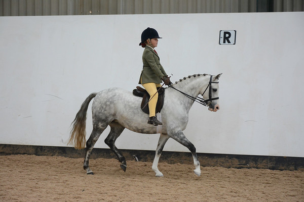 Newton Rigg Showing Show (Ridden)