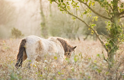 New Forest Ponies-1017