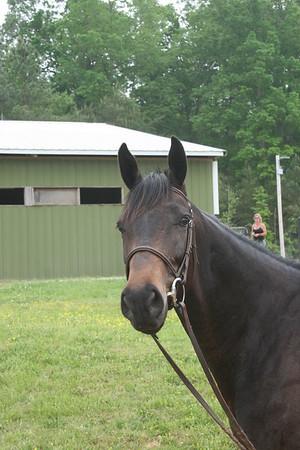 Equine Acquaintances