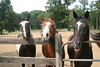 3 of Skyes paddock mates from left to right Shadow, Brego, and Diablo.