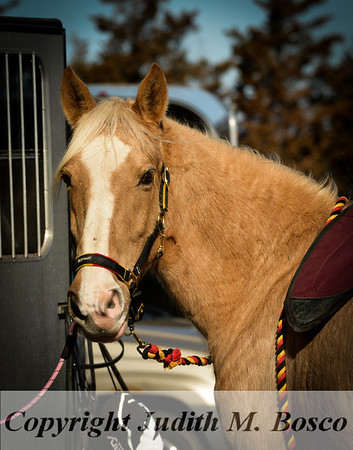 All the Kings Horse Pleasure Ride 3/23/13