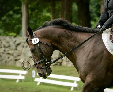 Lyme Horse Trials 2015