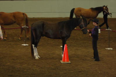 Showmanship 13 & 14 Saddle Type