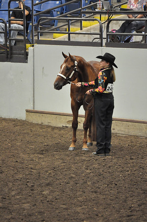 Showmanship Novice All Ages Quarter Type
