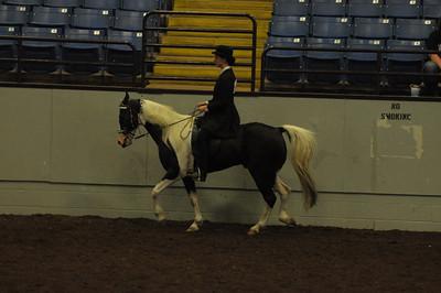English Equitation All Ages Saddle Seat