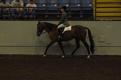 Hunter Under Saddle 15 & Over Saddle