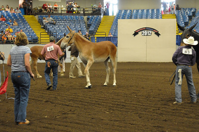 2012 Missouri State Fair