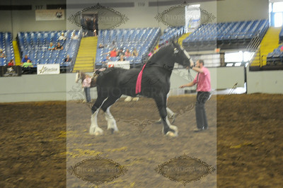 2014 Missouri State Fair