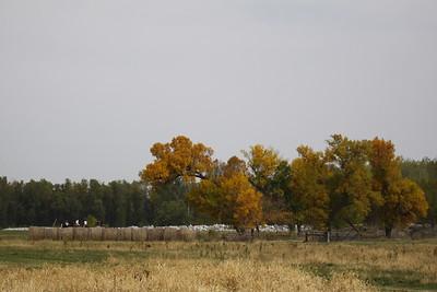 NHH Hunter Pace 9-30-2012 064