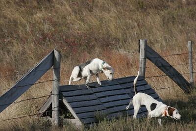 NHH Burwell Hunt 10-5-2012 028