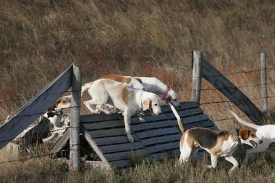NHH Burwell Hunt 10-5-2012 022
