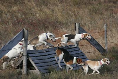 NHH Burwell Hunt 10-5-2012 018