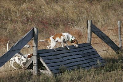 NHH Burwell Hunt 10-5-2012 027