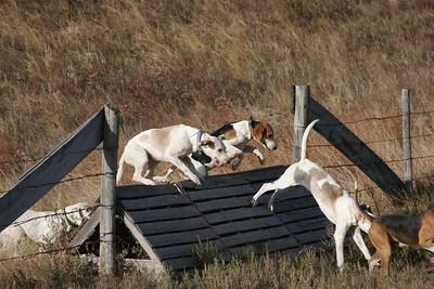 NHH Burwell Hunt 10-5-2012 025