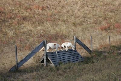 NHH Burwell Hunt 10-5-2012 031