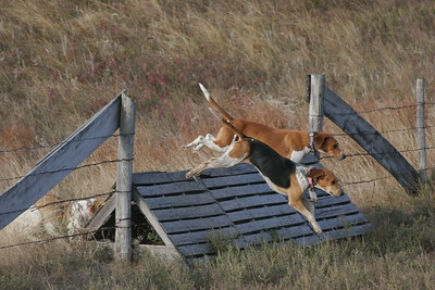 NHH Burwell Hunt 10-5-2012 015